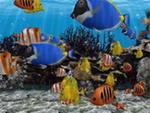 Фэн-Шуй, аквариум