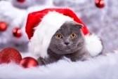 кошка в новогоднем колпаке